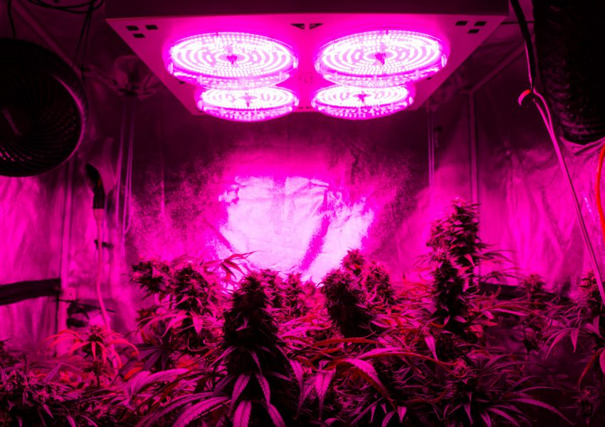 Grow Lights Toronto