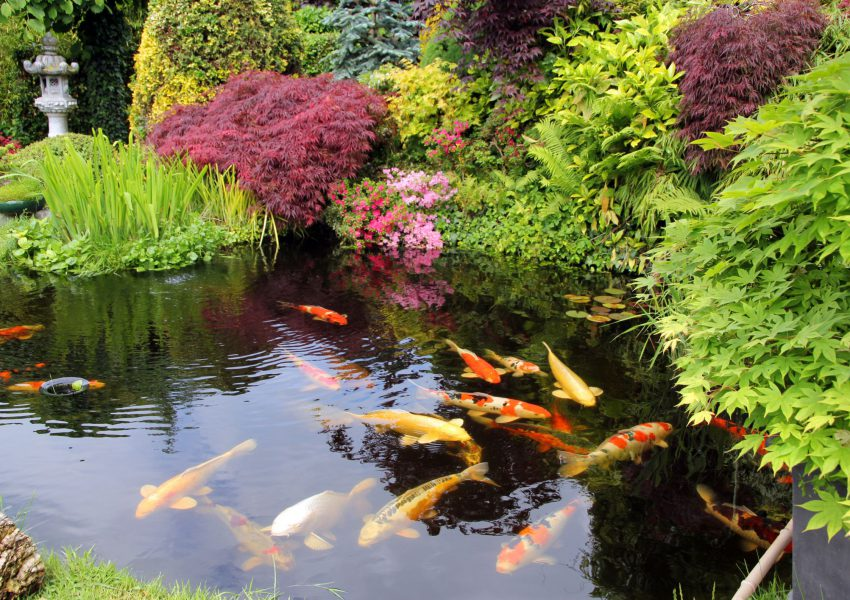 Developing And Maintaining Your Pond